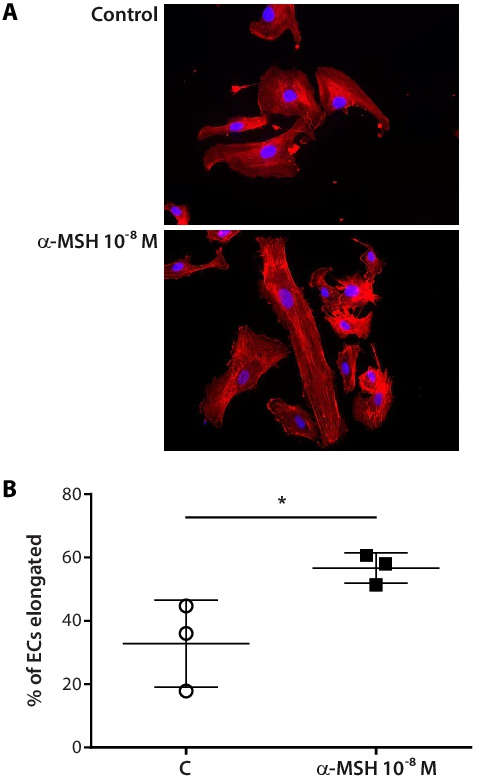 Melanocortin-1 Receptor Positively Regulates Human Artery